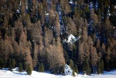 moritz snowkiting st Швейцария Стоковые Изображения RF