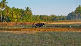 MORJIM, GOA, INDIA - CIRCA DECEMBER 2013: The young man ploughin Stock Images