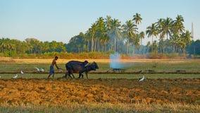 MORJIM, GOA, INDIA - CIRCA DECEMBER 2013: The young man ploughin Royalty Free Stock Images