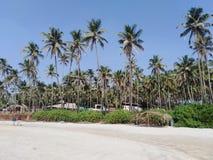 Morjim plaża, Goa, India zdjęcie royalty free