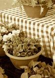Mormoderns Houseplants frammanar nostalgi fotografering för bildbyråer