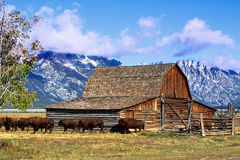 Mormon Row Barn in the Grand Tetons Stock Images