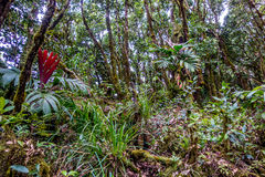 Morne Seychellois National Park - Mahe - Seychelles Royalty Free Stock Photo