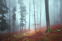 Mornig autumn foggy forest path royalty free stock image