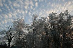Mornig de la Navidad Imagenes de archivo