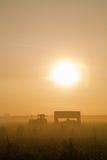 Mornig dimma Arkivbild