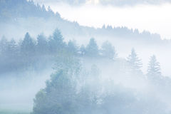 Mornig mist Stock Images