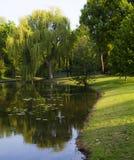 Mornig soleggiato e fresco fotografie stock libere da diritti