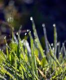Mornigdauw op een grasbladen vlak na zonsopgang Stock Foto