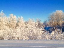 Mornin gelido Immagini Stock Libere da Diritti
