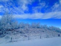 Mornin gelido Immagini Stock