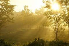 Morning. Sunrise in the foggy morning Stock Image