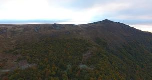 Aerial view of autumn mountain forest in fog stock video