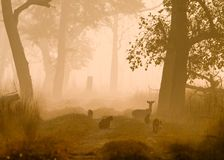 Morning atmosphere in Bardia National Park, Nepal. Spotted deers and monkeys in the forest Royalty Free Stock Images