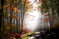 Morning autumn day Royalty Free Stock Image
