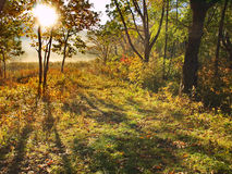Morning in autumn forest Royalty Free Stock Photography