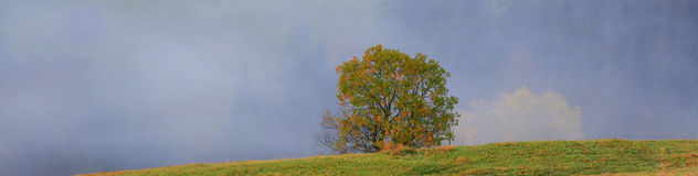 Morning autumn landscape with a lone tree and thick fog Royalty Free Stock Images