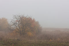 Morning autumn landscape meadows forests. In the fog Royalty Free Stock Photos