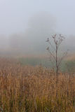 Morning autumn landscape meadows forests. In the fog Royalty Free Stock Photography