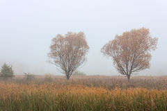 Morning autumn landscape meadows forests Royalty Free Stock Photo