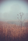 Morning autumn landscape meadows forests. In the fog Royalty Free Stock Photo