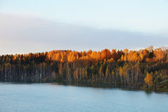 Morning autumn landscape at the pond in a wood Royalty Free Stock Photography