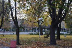Morning. Autumn morning in park Royalty Free Stock Photo