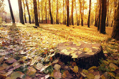 Morning in the autumn park Royalty Free Stock Photography