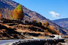 Morning autumn road. Yellow autumn tibetan road ,China royalty free stock photos