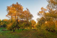 The morning autumn trees Stock Photo