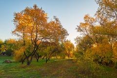 The morning autumn trees Stock Photo