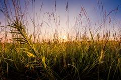Morning awakening of nature. Royalty Free Stock Images