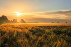 Morning awakening in the wheat culture stock images