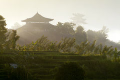 Morning in Bali Royalty Free Stock Images