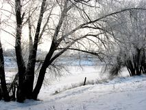 Winter morning on the river bank. Morning bank river winter frost landscape beautiful snow frost season nature sunny Stock Photography