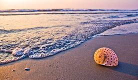 Morning on the beach Stock Image
