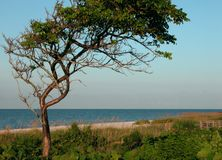 Morning on the Beach. Beach framed by a tree Stock Image