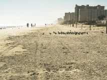 A morning on the beach. This beach is located near the city of Daytona Beach, Florida. Photo taken in winter 2016 during holidays. It was a quiet morning Stock Photo