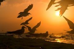 Morning at The Beach. Sea Gulls at Sunrise Mexican riviera, Playa Del Carmen Royalty Free Stock Photo