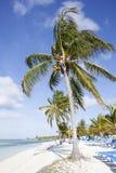 Morning Beach Royalty Free Stock Image