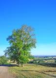 Morning beautiful landscape Stock Photo