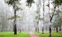 Morning birch grove in deep autumn fog Royalty Free Stock Photos