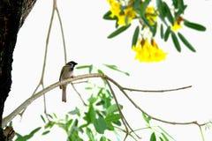 Morning Bird stock photography