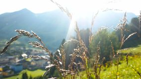 Green grass water drops mountains stock video footage
