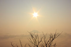 Morning. Branch on top of mountain with sea mist and sun Royalty Free Stock Images