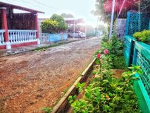 Morning breeze. Beautiful morning bathed in a light rain and breeze, red flowers in the street royalty free stock photos
