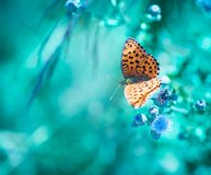 Morning butterfly on green meadow Stock Images