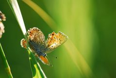 Morning butterfly royalty free stock photos