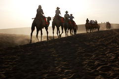 In the morning,camles in the desrt. Camels in Singing Sands Mountain gansu province in China Stock Photography