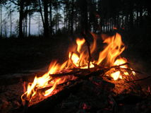 Morning campfire Royalty Free Stock Photo